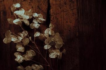 Brautstrauß Blumen Zweig Silbertaler Lunaria Blumenschmuck